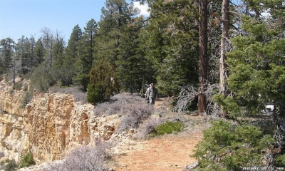 Walk through Dixie National Forest at the edge of Bryce Canyon.