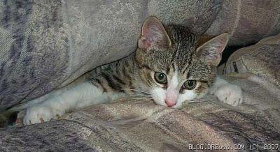 Рыся The Cat