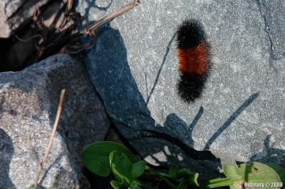 Funny fuzzy caterpillar.