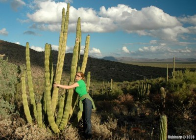 Alena hugging Organ Pipe Cactus. Really. No Photoshop.