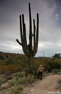 Papa and one of the bigger Saguaros at Saguaro National Park.