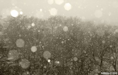 First snow of 2008.