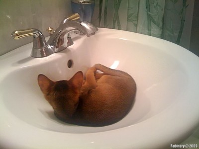 Getting ready to sleep right in the sink.