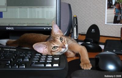 Shublik being a computer virus.