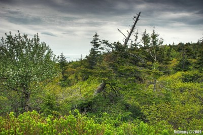 Fresh green forest. Top of Cadillac Mountain.