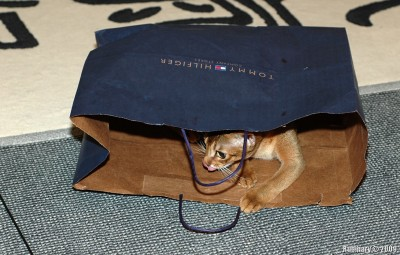 Cat in a bag. Always a mystery.