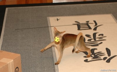 Shublik. Ball. Very sad.
