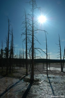 Dead trees on thermal ground.