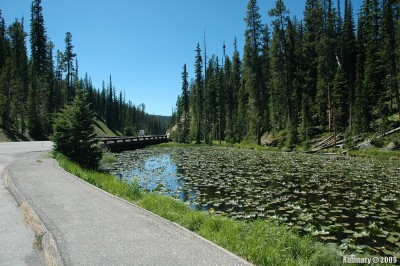 Lilly pond near the Continental Divide.