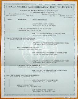 Shublik's family tree.