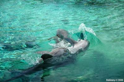 Hilton dolphins.