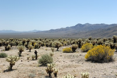 Cholla jungle.