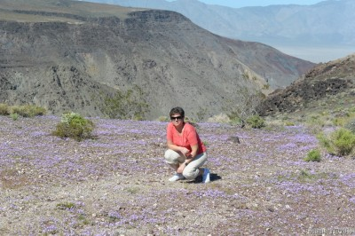 Flower field and a canyon near Death Valley.