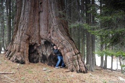 Pretty much the first Sequoia we got close to.