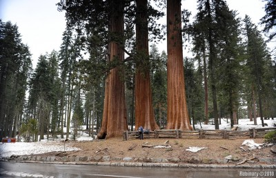 Three Sequoias. Look at the guy in front to get a sense of scale.