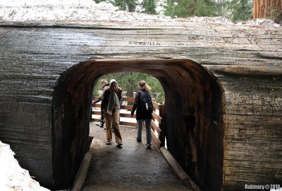 Tunnel in a fallen Sequoia.