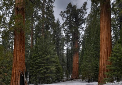 General Sherman tree is in the middle. There are people standing near it.