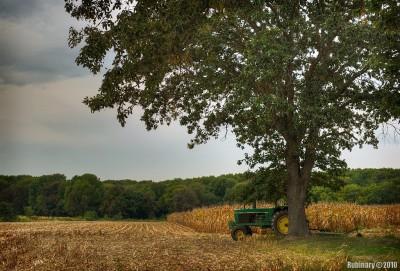 Corn field somewhere in New Jersey.
