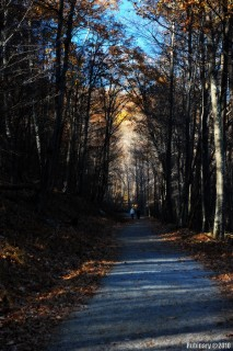 On one of the trails in Shenandoah's forest.
