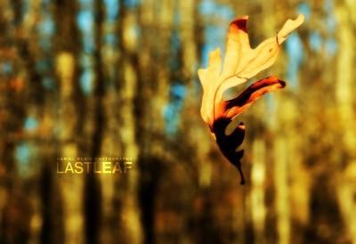 Last Leaf.