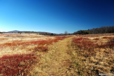Big Meadow trail.