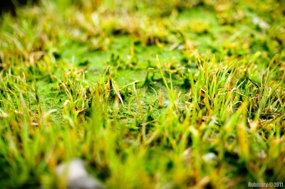 Beach grass. Taken at f/2.