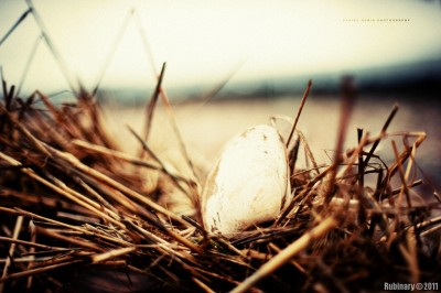 Shell in hay. Taken at f/1.2.