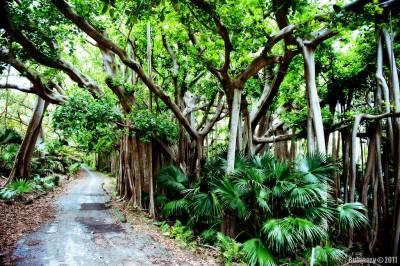 Park in Bermuda.