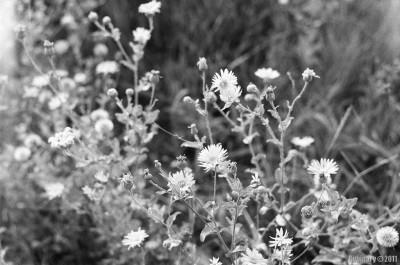 Flowers. Floyd Bennett Field.