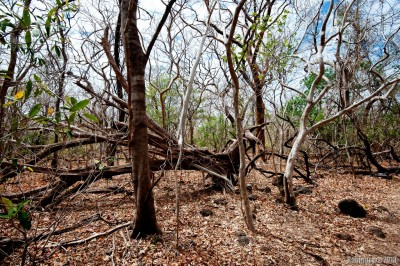 Dry tropical forest of Santa Rosa.