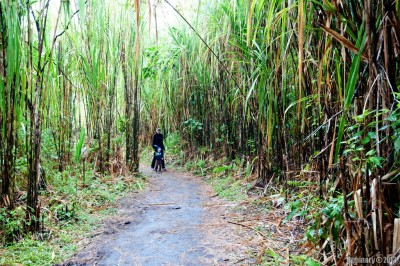 Trail inside Arenal Volcano National Park.