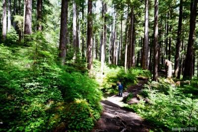 Sol Duc trail.
