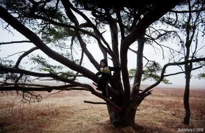 Climbing tree.