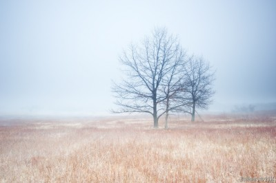 Big Meadow in fog.