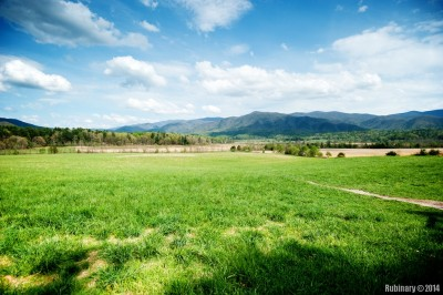Meadows at Cades Cove.