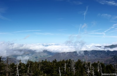 Over the clouds at Clingmans Dome.