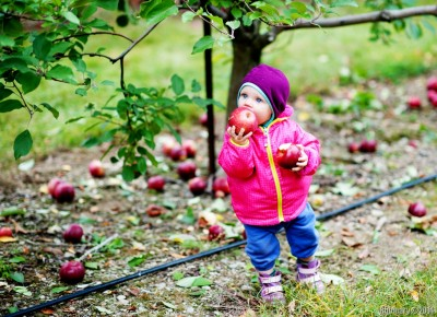 This reminds me of an old photograph of Alёna when she was a little girl. Apple in each hand.