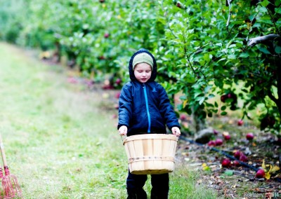 Apple picking. Full heavy basket.