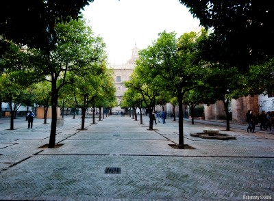 Garden of orange trees on cathedral grounds.