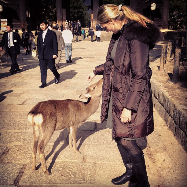 Deer (via Instagram)