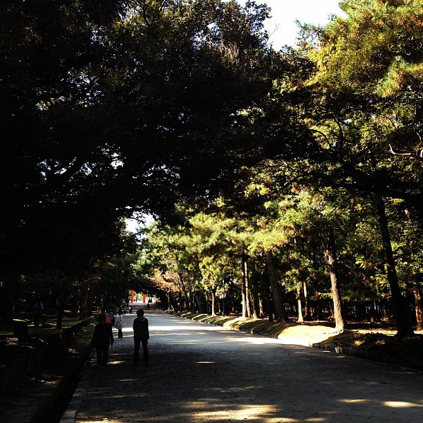 Nara Park (via Instagram)