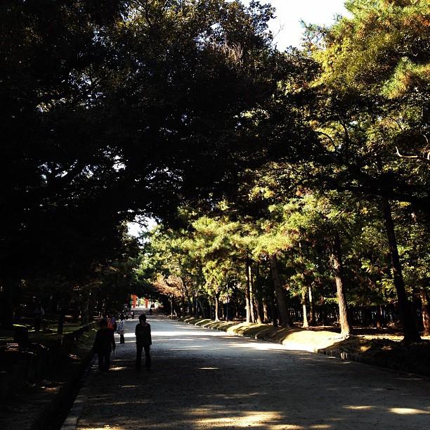 Nara Park (via Instagram)