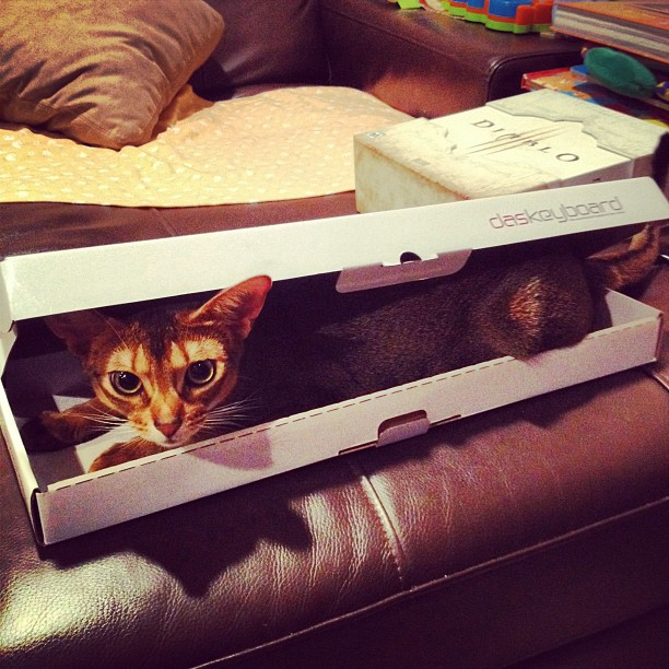 Das Cat (via Instagram)