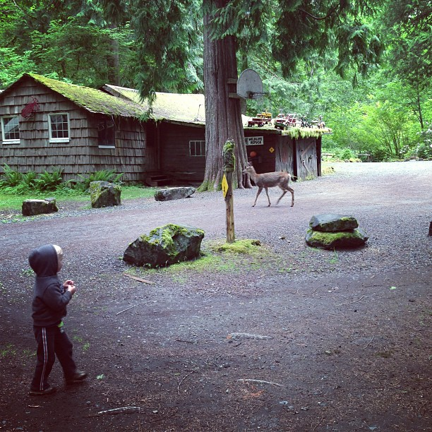 Arosha and Deer (via Instagram)