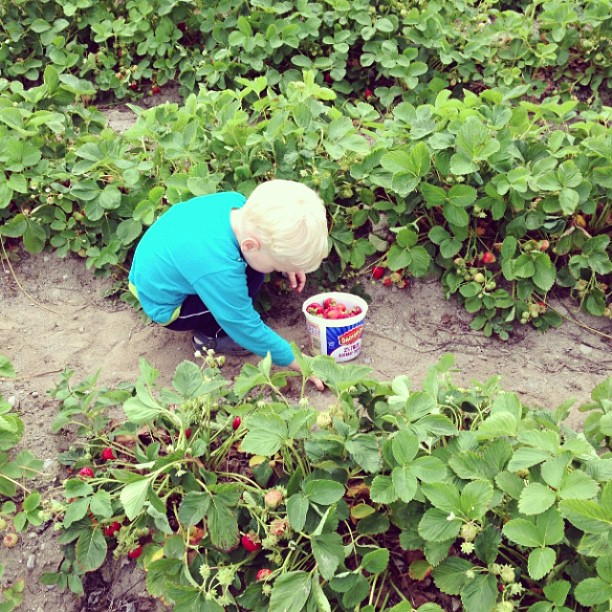 Strawberry Picking (via Instagram)
