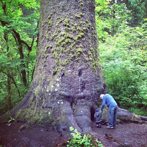 Sitka Spruce (via Instagram)