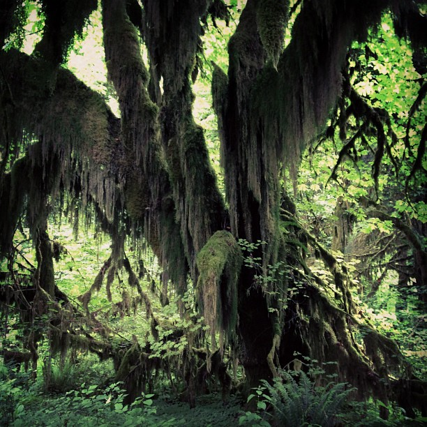 Hoh Rain Forest (via Instagram)