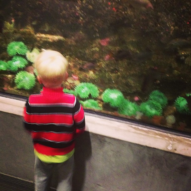 Seattle Aquarium (via Instagram)