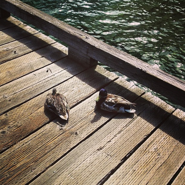 Ducks (via Instagram)