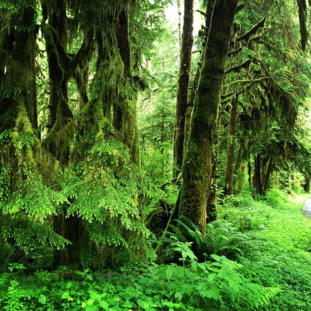 Hoh Rainforest (via Instagram)
